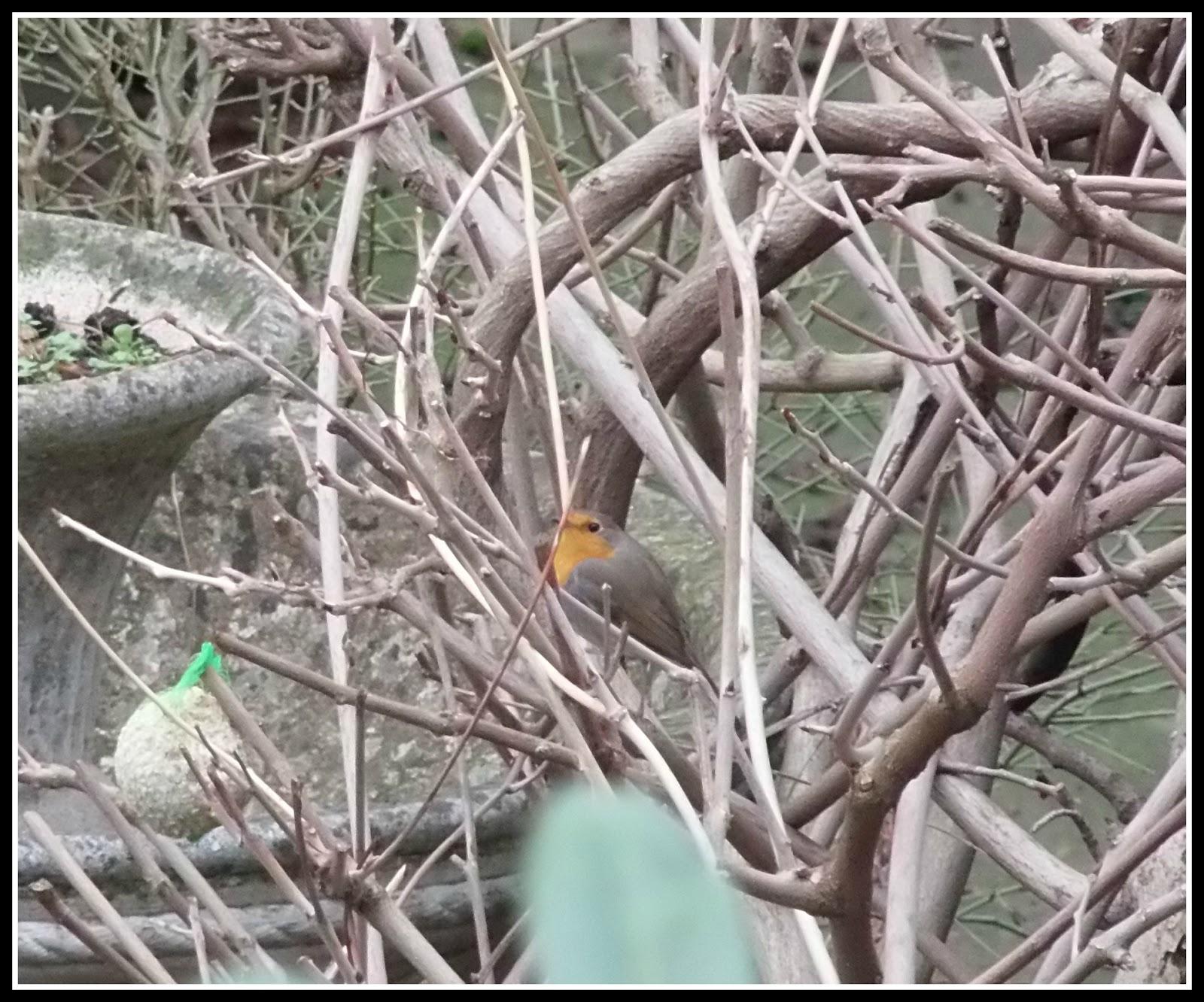 Les photos de floralie les oiseaux de nos jardins et de - Les oiseaux de nos jardins et de nos campagnes ...