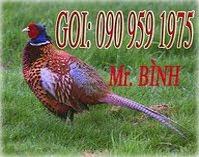 CHIM TRI GIA RE 100k/con