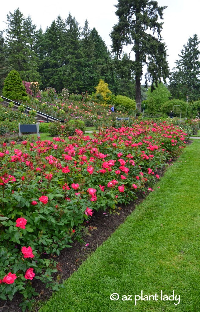 Road Trip: Roses, Presidents and a Trip to the Far East - Ramblings ...