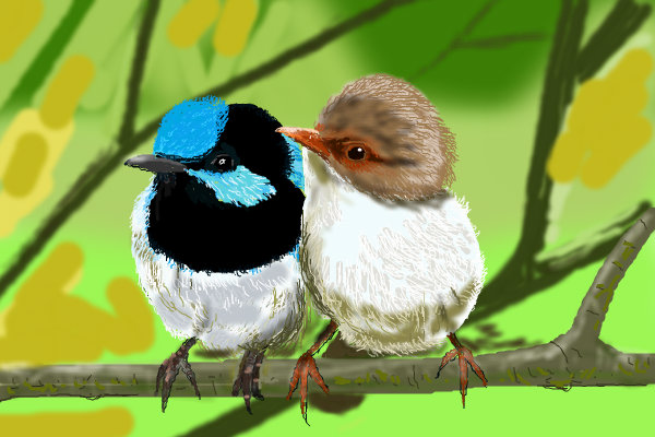 Love birds wallpapers for desktop Funny Animal