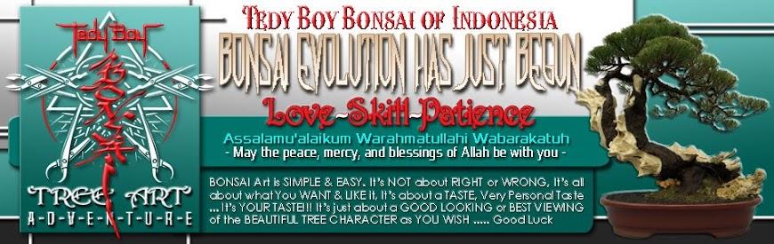 Bonsai USA - American Bonsai - America Bonsai Trees Style