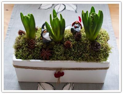 Tre hyacinter i kruka, bild 1