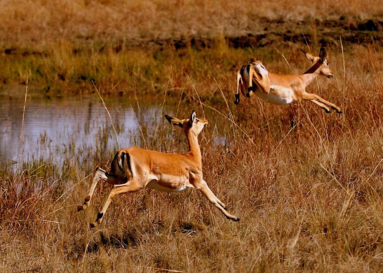 Poaching endangered animals wildlife conservation african wild animal