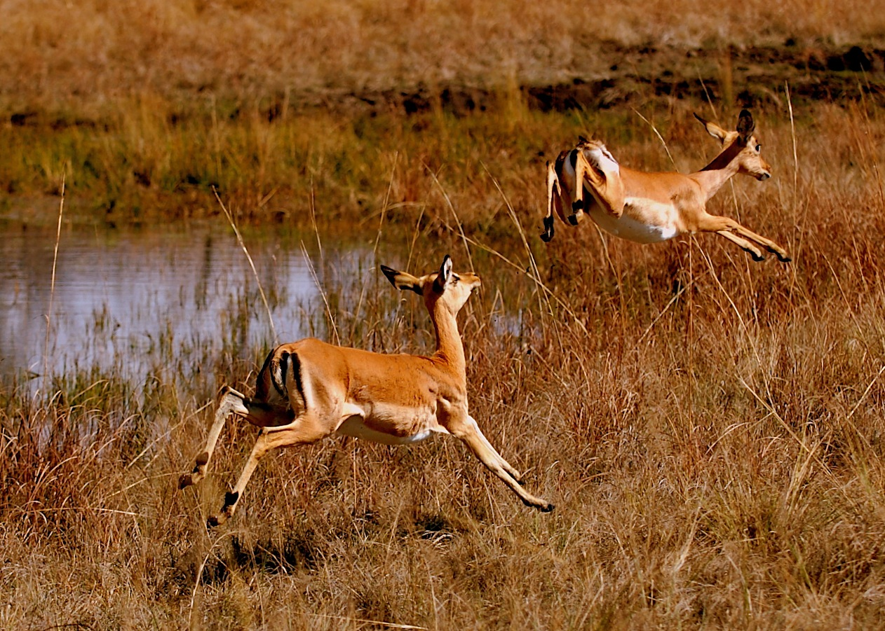 Beautiful African Animals Safaris: Wildlife of Africa ...