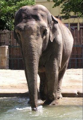 Meghalt Zitta az elefánt :(