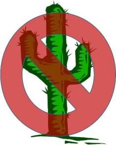 No Saguaro