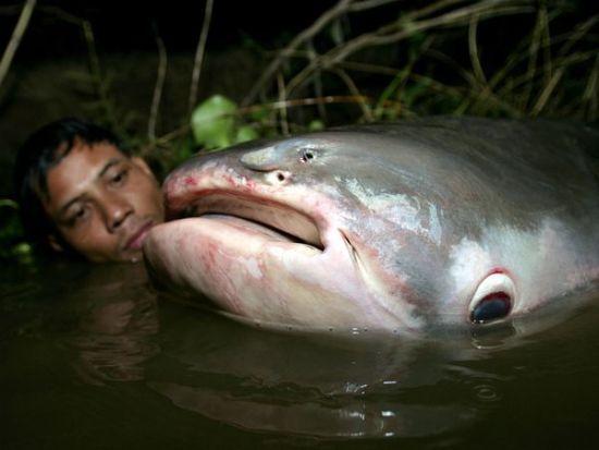 Lelaki Dibaham Ikan Gergasi Di Hutan Amazon