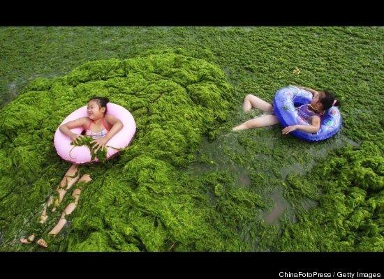 Swimming In Green Algae China Nice N Funny
