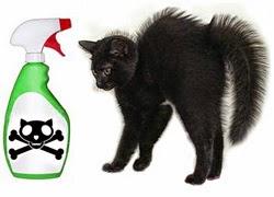 veterinaria elementos caseros peligrosos para gatos
