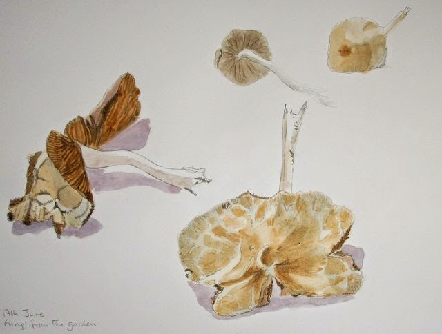 Watercolour painting of fungi