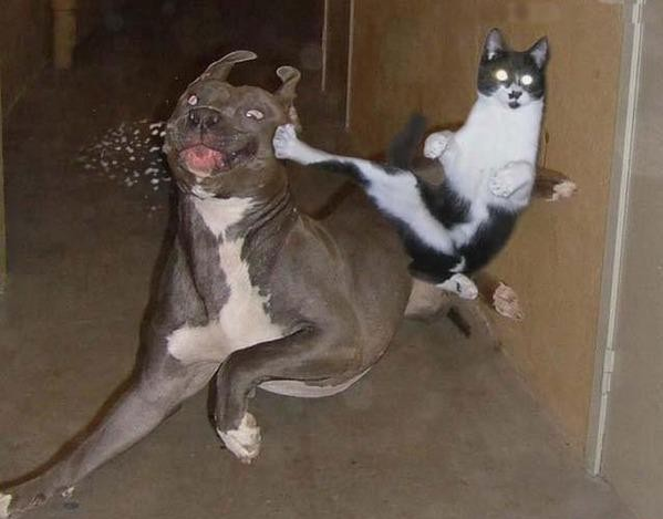 cats vs dogs amazing creatures