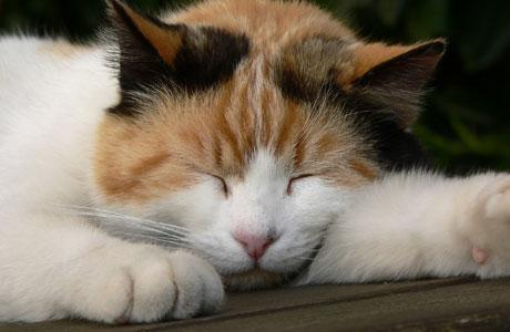 Gambar Kucing Tidur 4