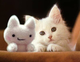 Cute Kitty Photo