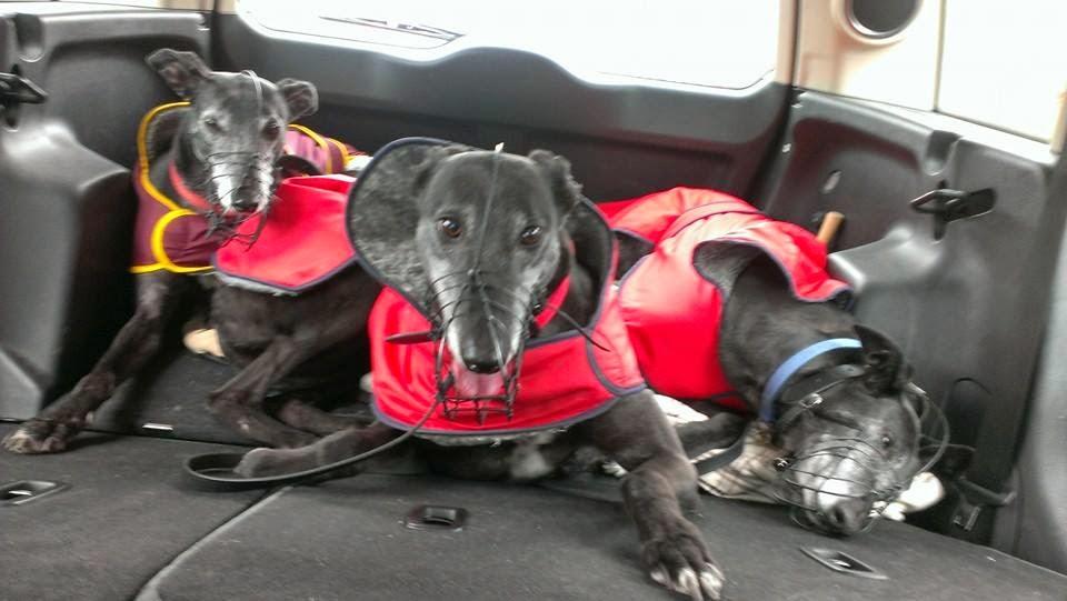 Wimbledon Greyhound Welfare