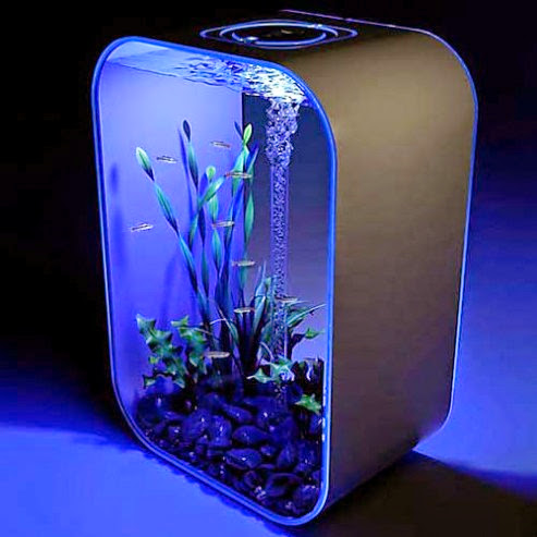 Coolest Fish Bowls and Awesome Aquarium Designs (15) 10