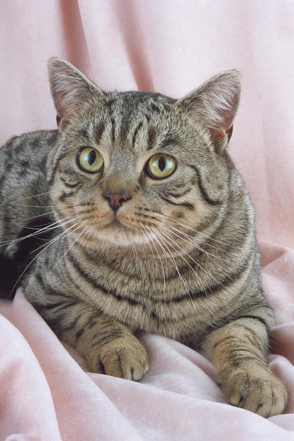 cat eye mity 3