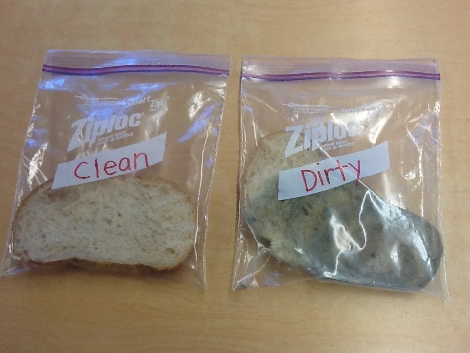 "moldy bread science project For this science project, you set out to answer the question, ""which food will mold grow on faster: bread, milk, bananas or cheese"" while completing the project, you will discover how quickly certain foods spoil and grow mold when you do not properly store them, such as placing them in a refrigerator."