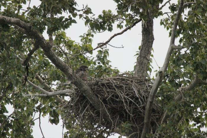 kenai river alaska float trip; bald eagle nest