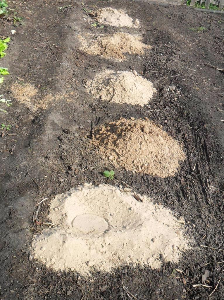 Под будущую грядку огурчиков подсыпал песочку