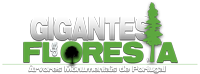 Blog Gigantes da Floresta