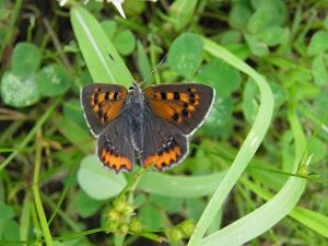 アパート 賃貸 東京 Blog の蝶の写真