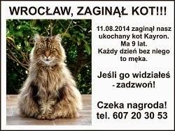 Wrocław - Szukamy kota Kayrona!