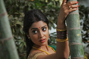 Shriya Saran latest Photos in saree-thumbnail-5