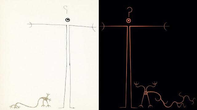 neuronas espejo,el niño poque? , la neurona solitaria