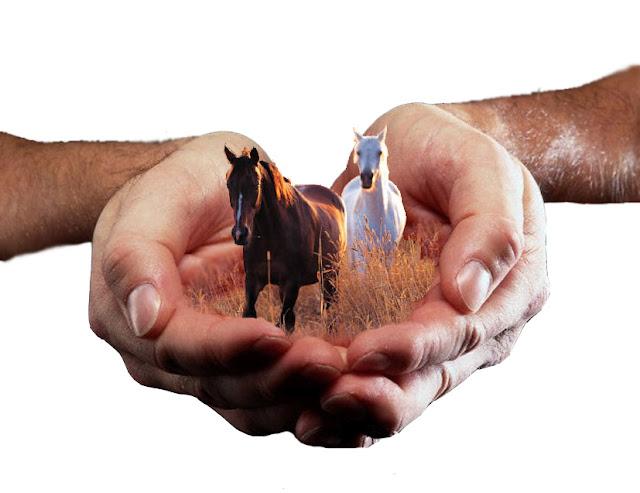http://3.bp.blogspot.com/-nvq8FP5MpuA/TZN2xrEQd-I/AAAAAAAAASQ/5kiaT7-pLBE/s640/hold_your_horses_by_rachaek.jpg