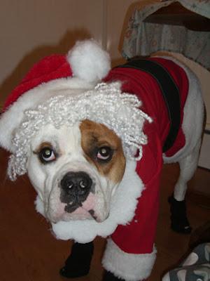 Perro+con+gorro+de+Santa+Claus Imagenes chistosas de perros navideño