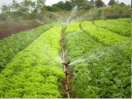 Rio Grande do Sul: Vitrines de Irrigação orientará