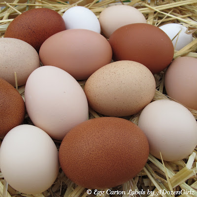 Brown eggshells from chickens