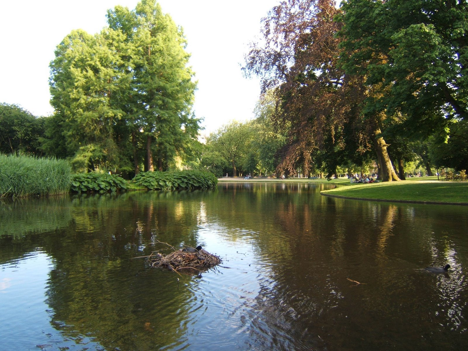 Vondel Park, Amsterdam.  Runner's paradise in the city.