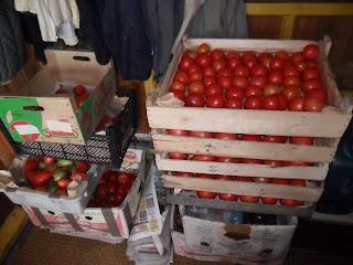 Урожай помидоров 2