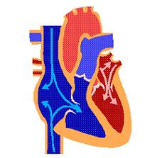 Animation of heart pumping blood http://terry-eng22.blogspot.com/2012