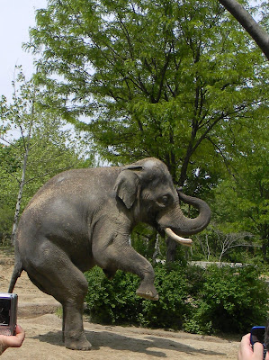 animal preschool theme, pictures of elephants, image
