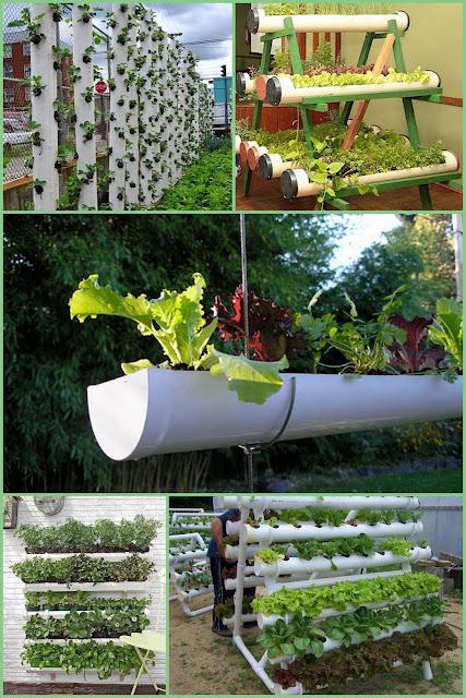 Nutrir&A??o : Plantando no quintal - Horta saud?vel na mesa!