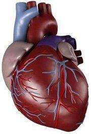 خفقان القلب السريع ...الاسباب والعلاج