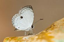 Random Butterfly