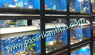 Pasar Ikan Hias Terlengkap Di Jakarta