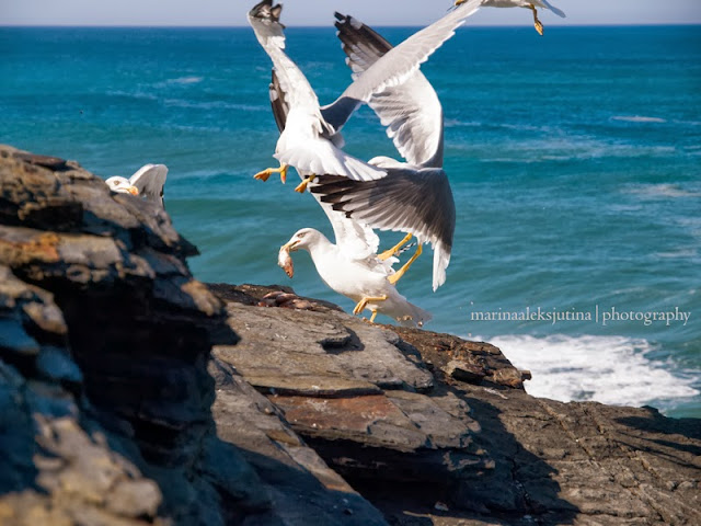 #ocean, #fishing, #seagulls
