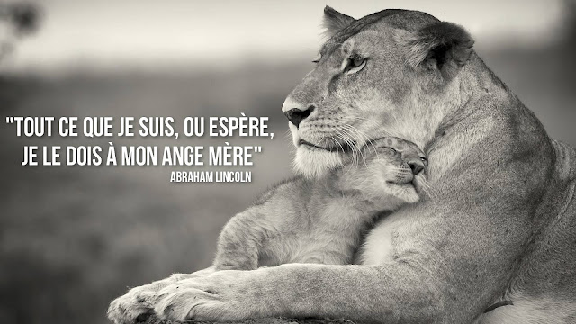 citation maman je t'aime   belle citation sur la vie et proverbe