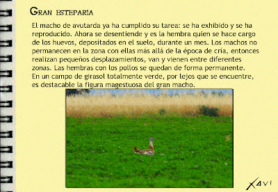 Avutarda- Javier Pérez Mata