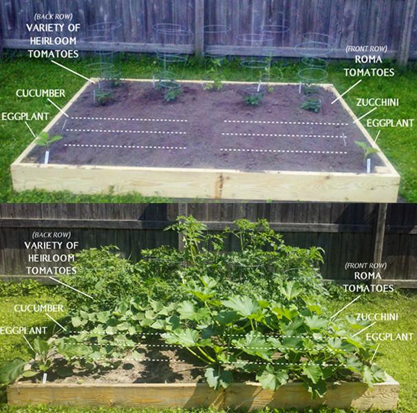 Health Blog Gardening Update Natural Rabbit Repellent