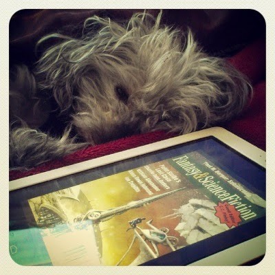 Murchie lays on his side beneath a red comforter. His eyes are barely open. In front of him sits my Kobo with the cover of F&SF's July/August 2014 issue on its screen. The cover shows a white-suited person sitting on an outcropping overlooking a silver rocket ship.