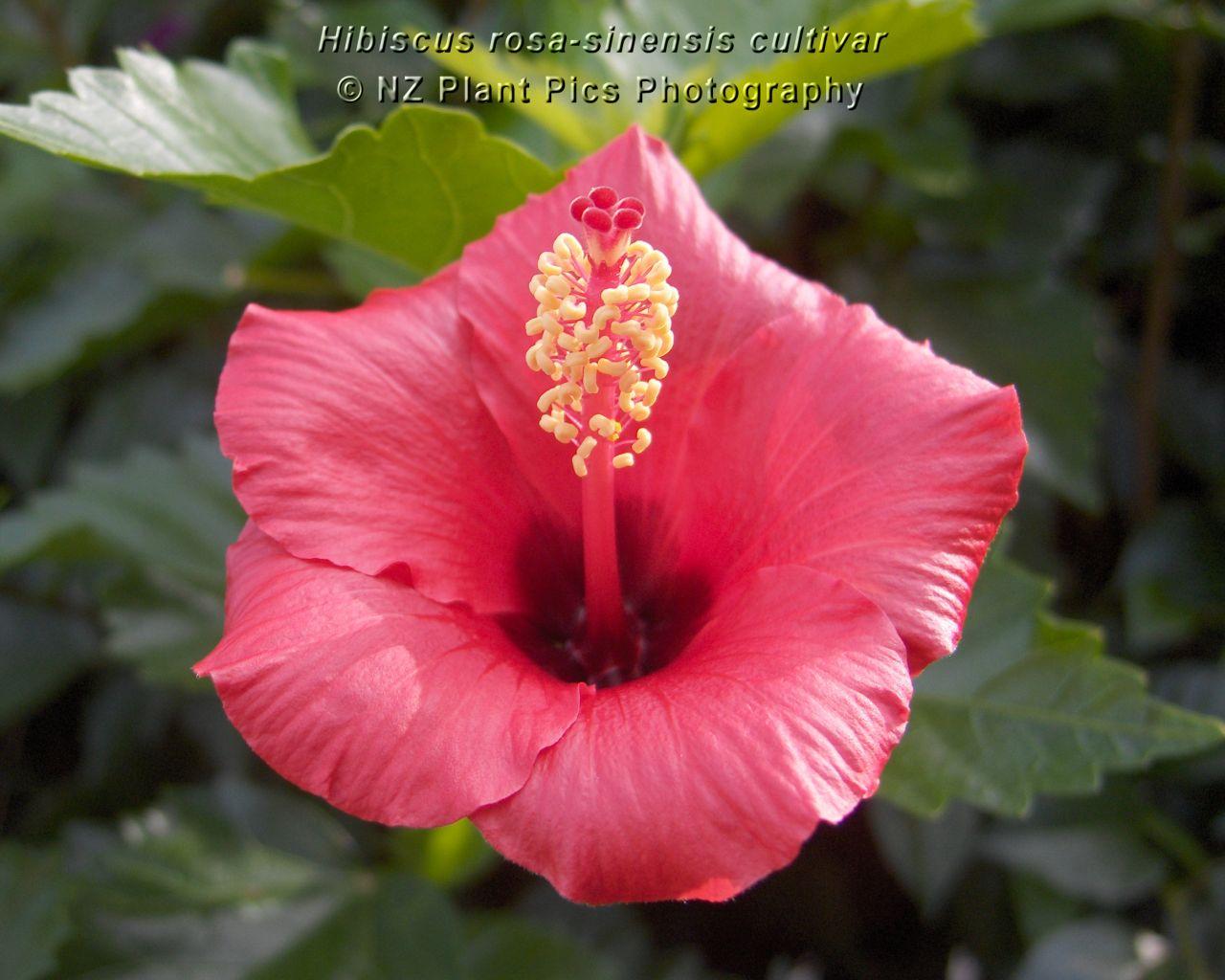 http://3.bp.blogspot.com/-ny1q9_F5qDM/TbaPpYSZJiI/AAAAAAAABPA/ym2ic5n7V3c/s1600/windows-7-flower-wallpaper.jpg