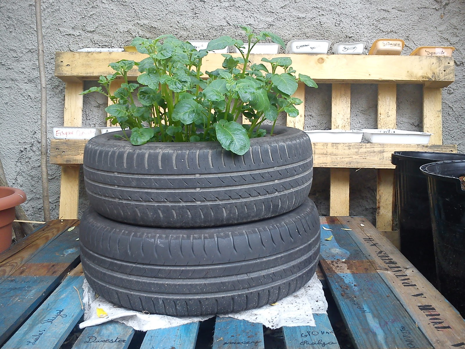 culture de la pomme de terre hors sol la tour patates. Black Bedroom Furniture Sets. Home Design Ideas