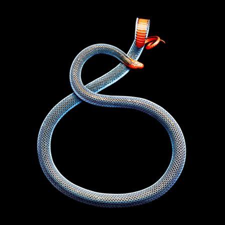 фото змей