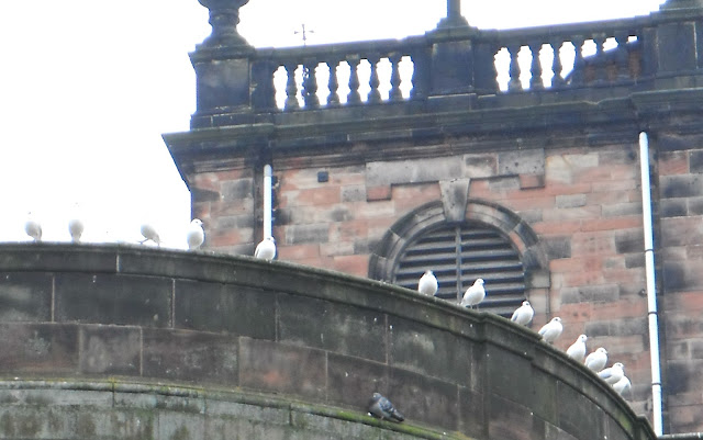 Gulls on St Modwen Church in Burton