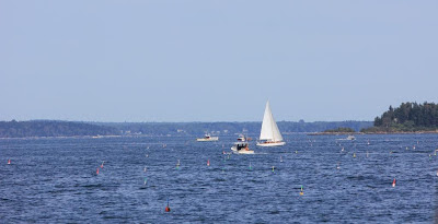 sailboat with lobster buoys
